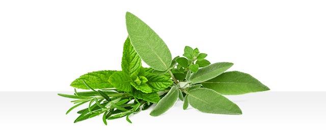 LOCKED: Fresh Herbs coupon